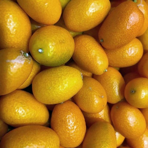 kumquat, mandarinas chinas