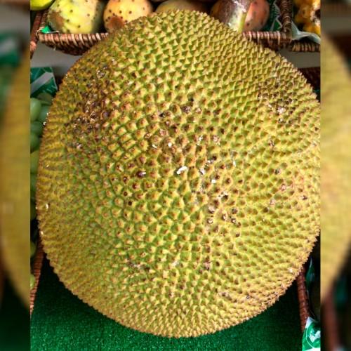 Fruta del pan o Jackfruit