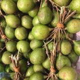 Setas cardo cultivadas